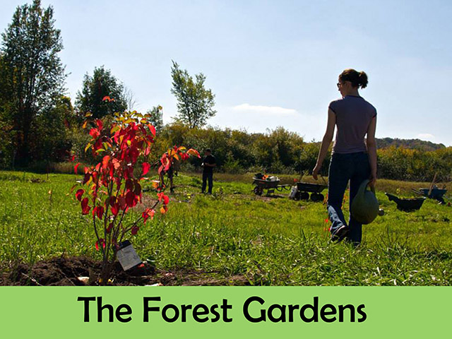 Learn about the Forest Gardens we've installed.